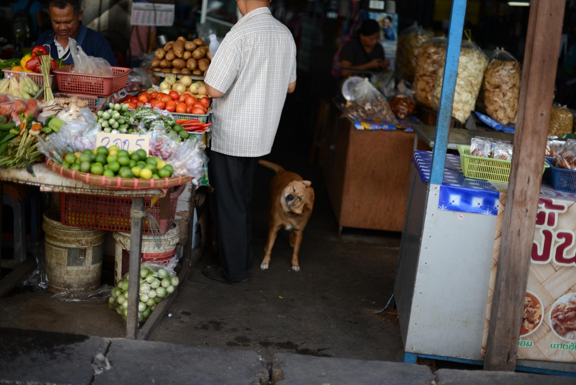 2013ランパーン/首を振る犬