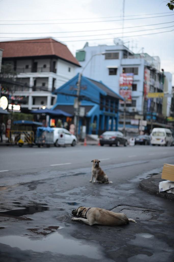 2013Bangkok/犬