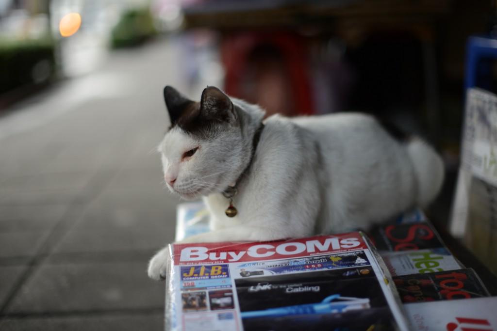 2013Bangkok/猫