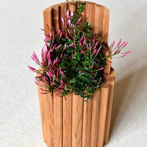 木の鉢(門松風)
