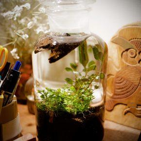 瓶の中で水草を飼う「ボトルアクアリウム」