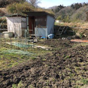 新しい貸し農園地を契約。小さな畝を2つ作る。パクチーと葉パクチーの種まき