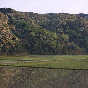 四国/黒潮町 「初夏の田んぼ」と「入野の海」