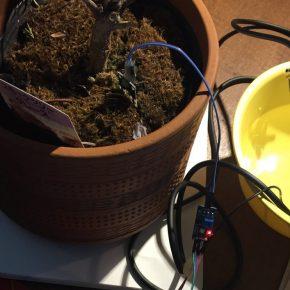 Arduino互換ボードでベランダの植物に自動灌水装置を作成